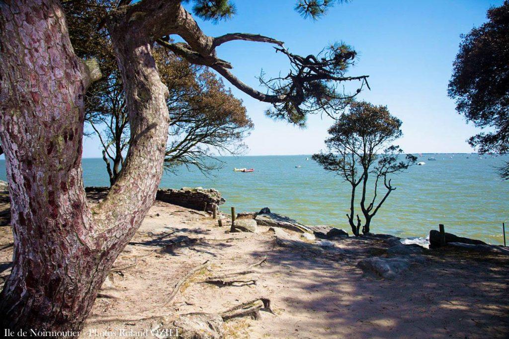 Photo Noirmoutier mer pins vacances en Vendée